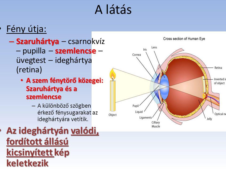 A látás Fény útja: Szaruhártya – csarnokvíz – pupilla – szemlencse – üvegtest – ideghártya (retina)