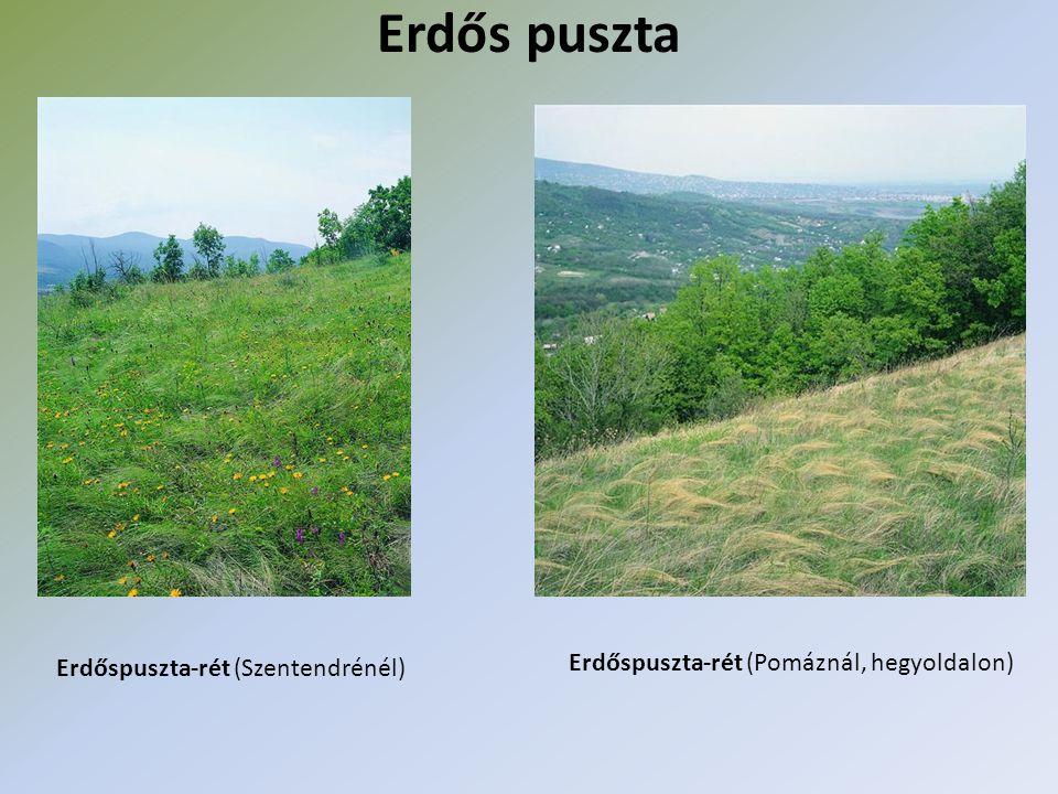 Erdős puszta Erdőspuszta-rét (Pomáznál, hegyoldalon)