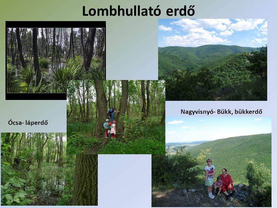 Lombhullató erdő Nagyvisnyó- Bükk, bükkerdő Ócsa- láperdő