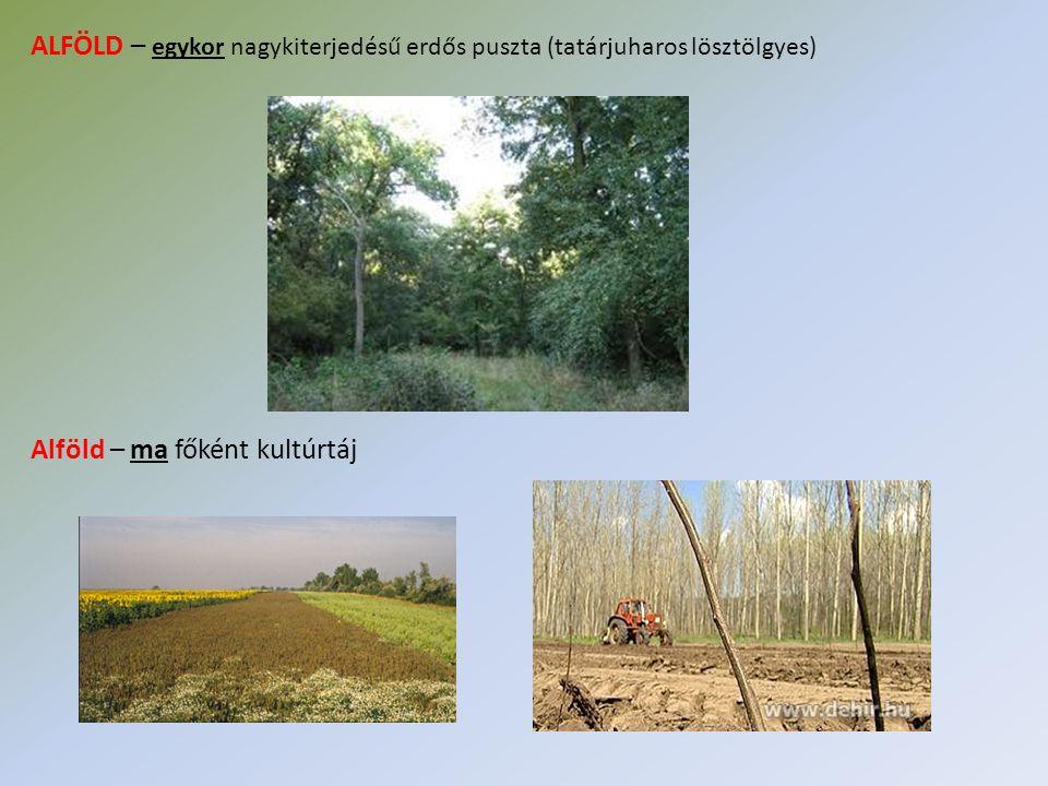 ALFÖLD – egykor nagykiterjedésű erdős puszta (tatárjuharos lösztölgyes)