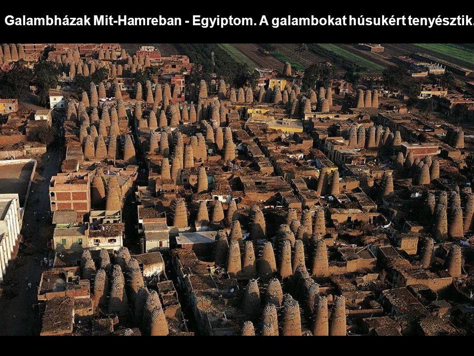 Galambházak Mit-Hamreban - Egyiptom. A galambokat húsukért tenyésztik.