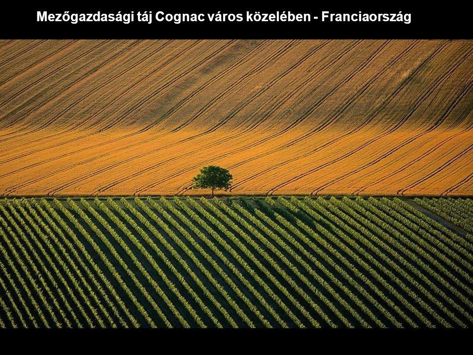 Mezőgazdasági táj Cognac város közelében - Franciaország