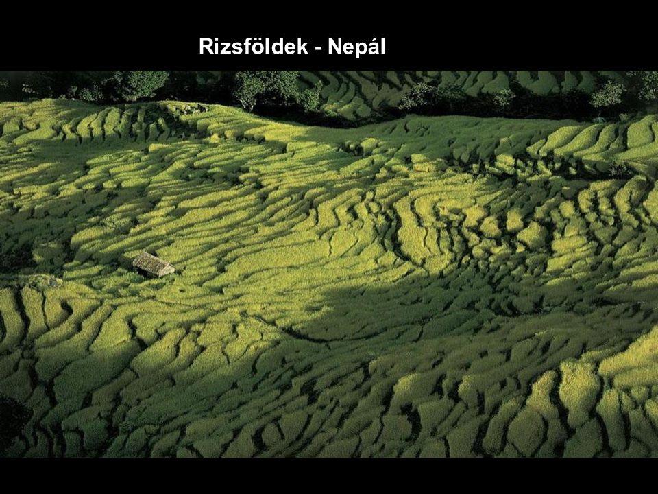 Rizsföldek - Nepál