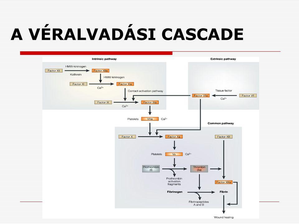A VÉRALVADÁSI CASCADE