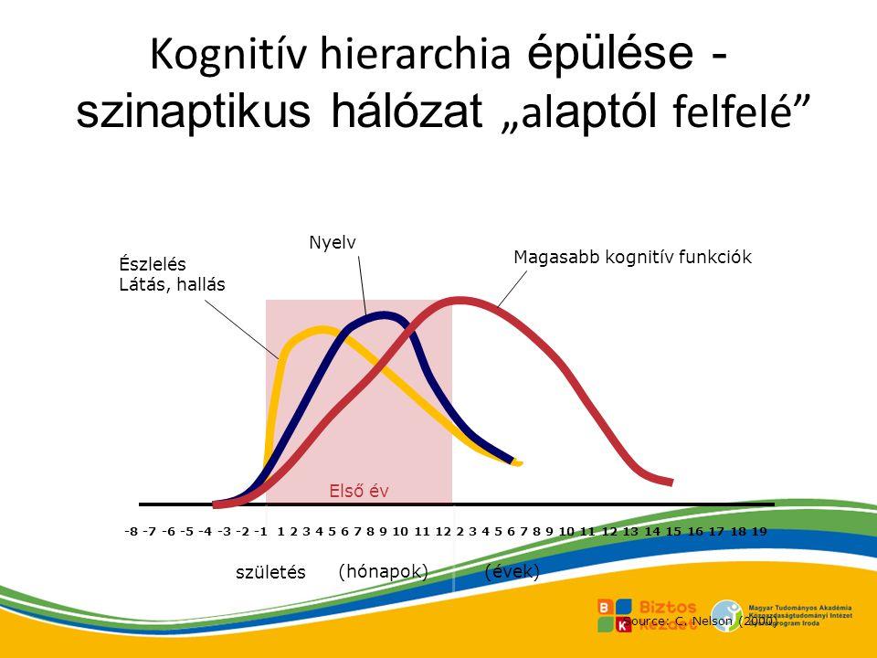 """Kognitív hierarchia épülése - szinaptikus hálózat """"alaptól felfelé"""