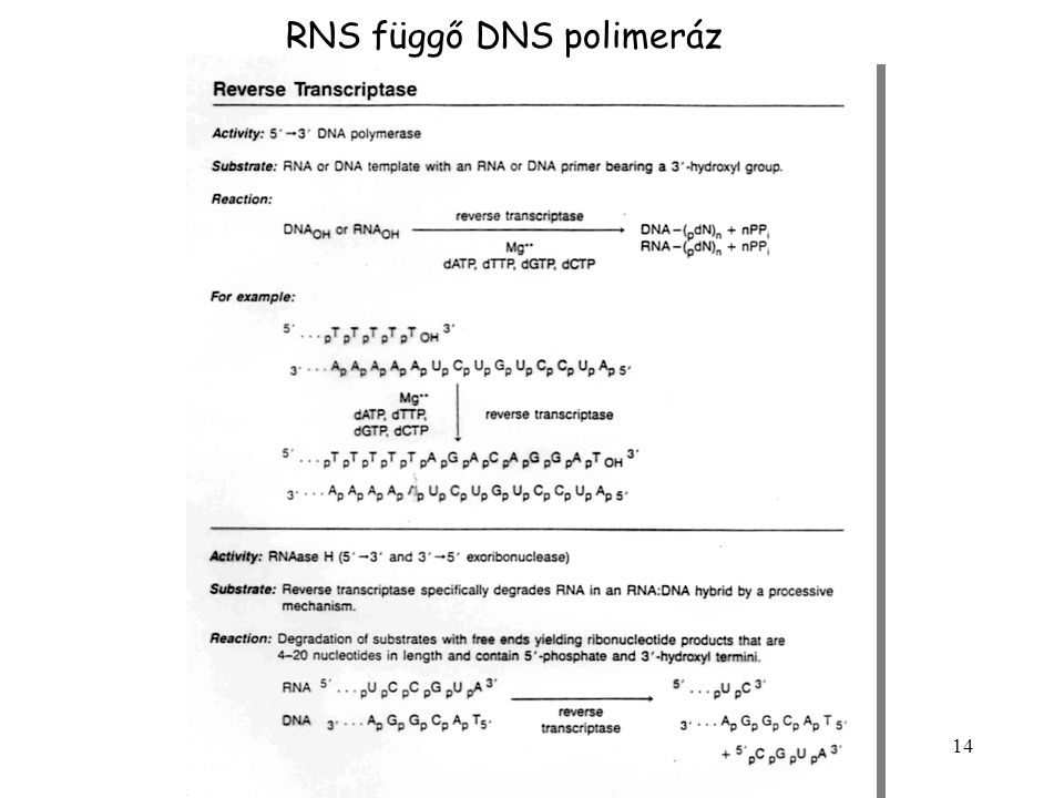 RNS függő DNS polimeráz