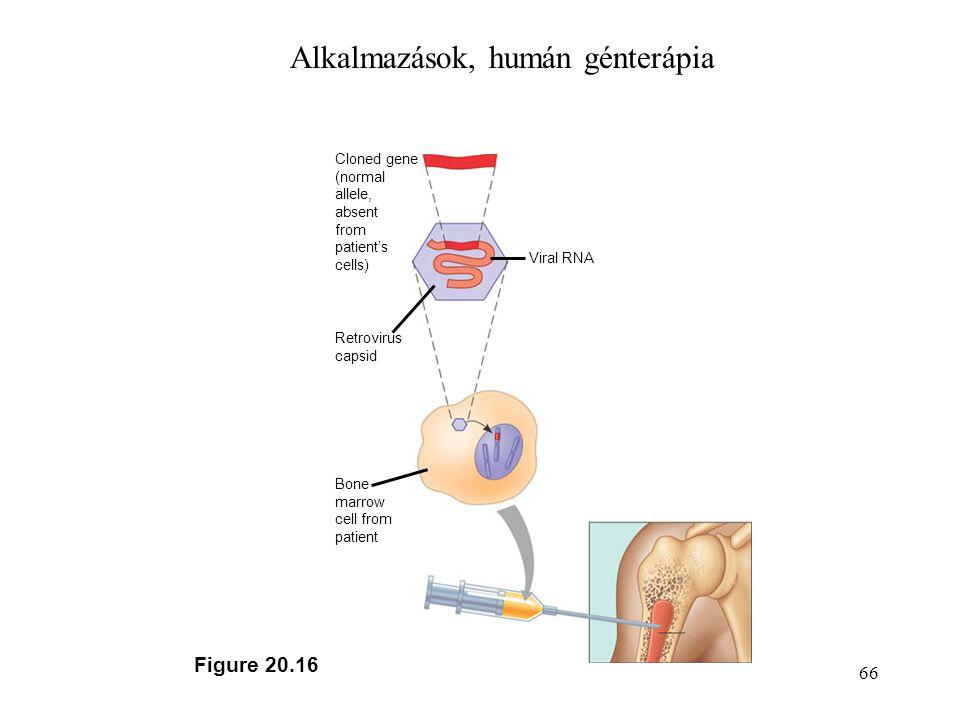 Alkalmazások, humán génterápia