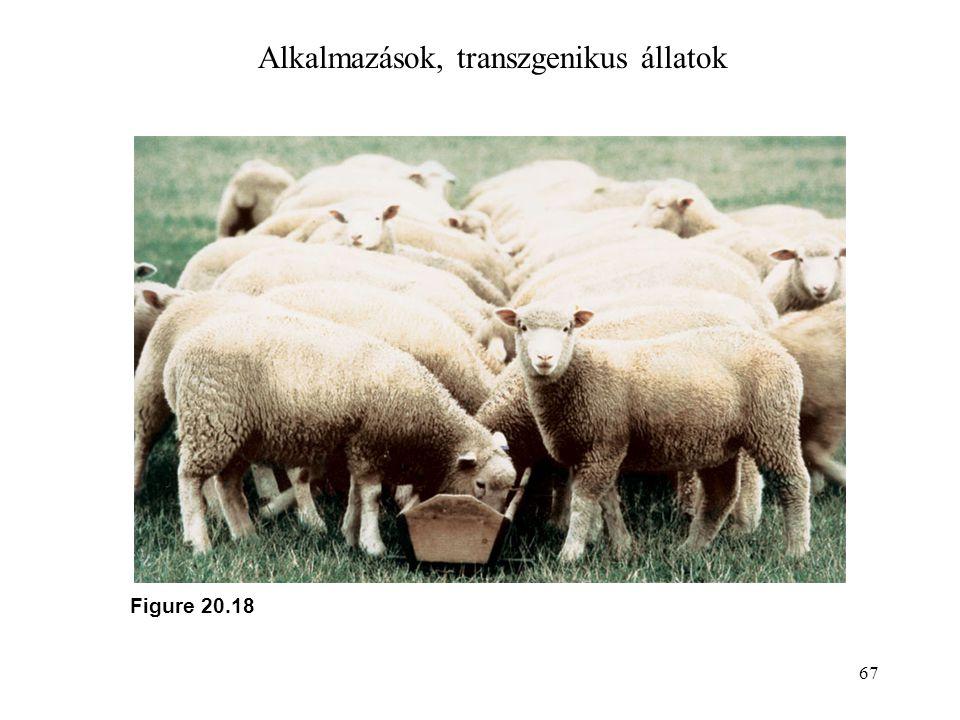 Alkalmazások, transzgenikus állatok