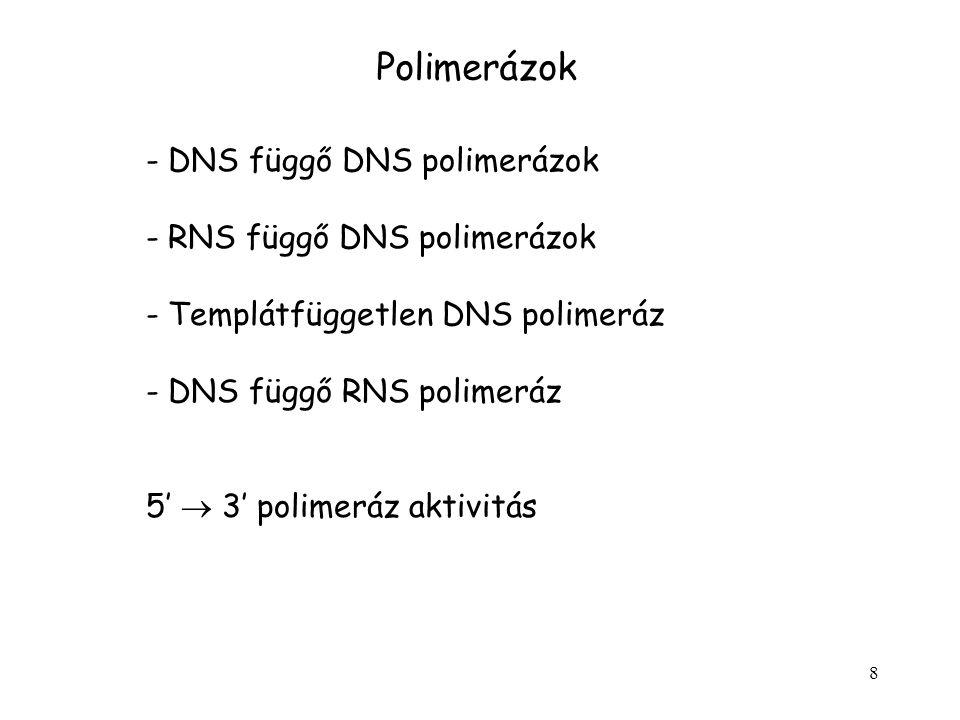 Polimerázok DNS függő DNS polimerázok RNS függő DNS polimerázok