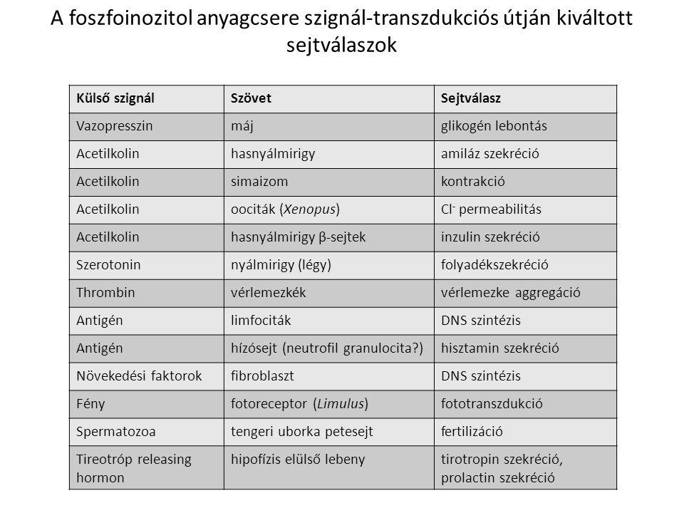 A G proteinhez kapcsolt szignál transzdukció és szignál amplifikáció
