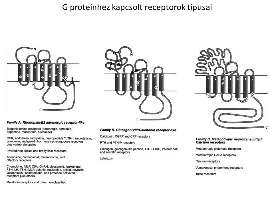 G-proteinnel interakcióba lépő receptorok szignál-transzdukciója