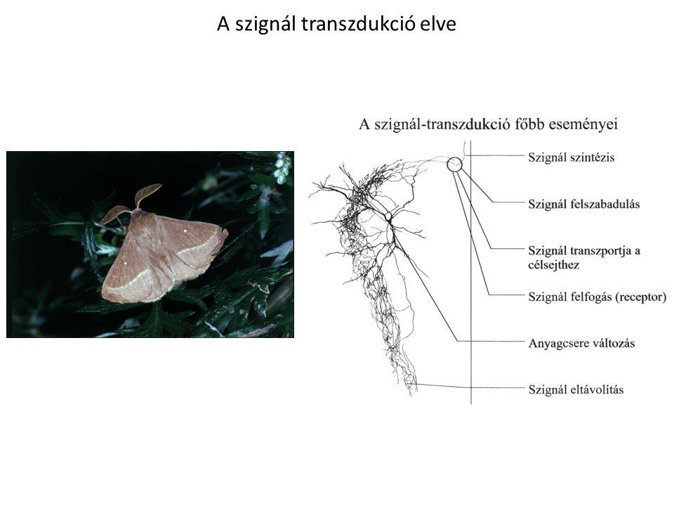 A szignál transzdukció főbb eseményei