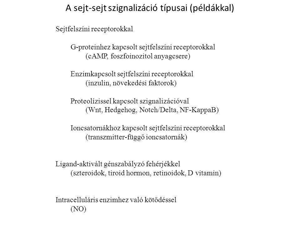 A receptorok klasszikus/funkcionális alapú felosztása (1)