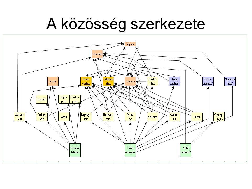 A közösség szerkezete