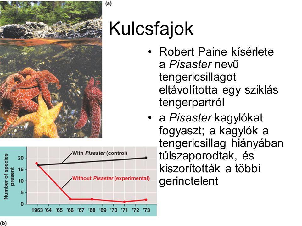 Kulcsfajok Robert Paine kísérlete a Pisaster nevű tengericsillagot eltávolította egy sziklás tengerpartról.