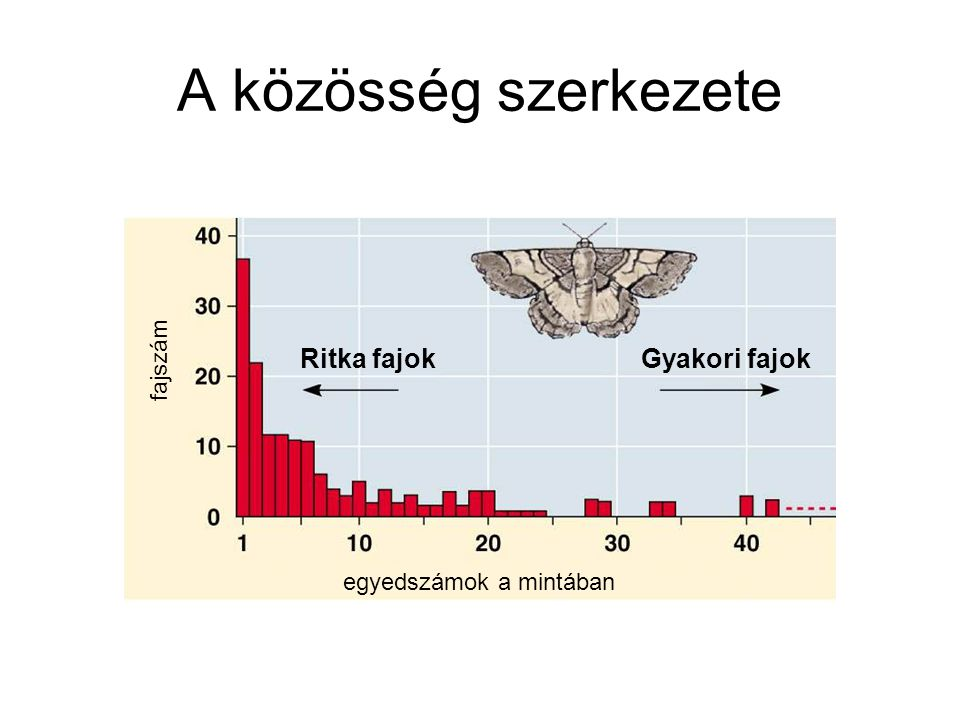 A közösség szerkezete Ritka fajok Gyakori fajok fajszám