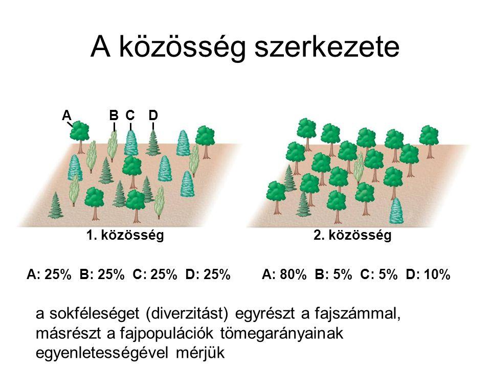 A közösség szerkezete A. B. C. D. 1. közösség. 2. közösség. A: 25% B: 25% C: 25% D: 25% A: 80% B: 5% C: 5% D: 10%