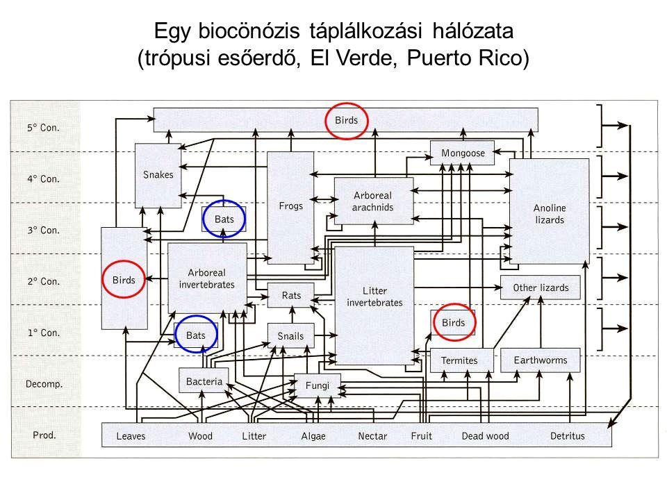 Egy biocönózis táplálkozási hálózata