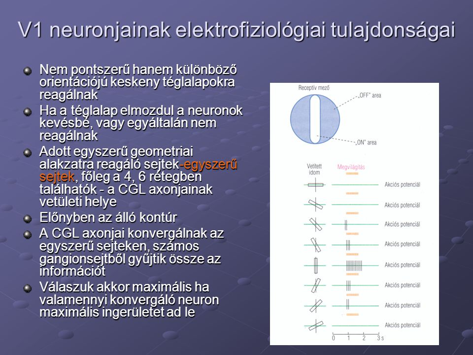 V1 neuronjainak elektrofiziológiai tulajdonságai