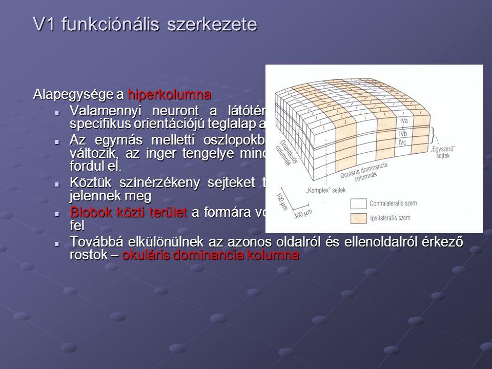 V1 funkciónális szerkezete