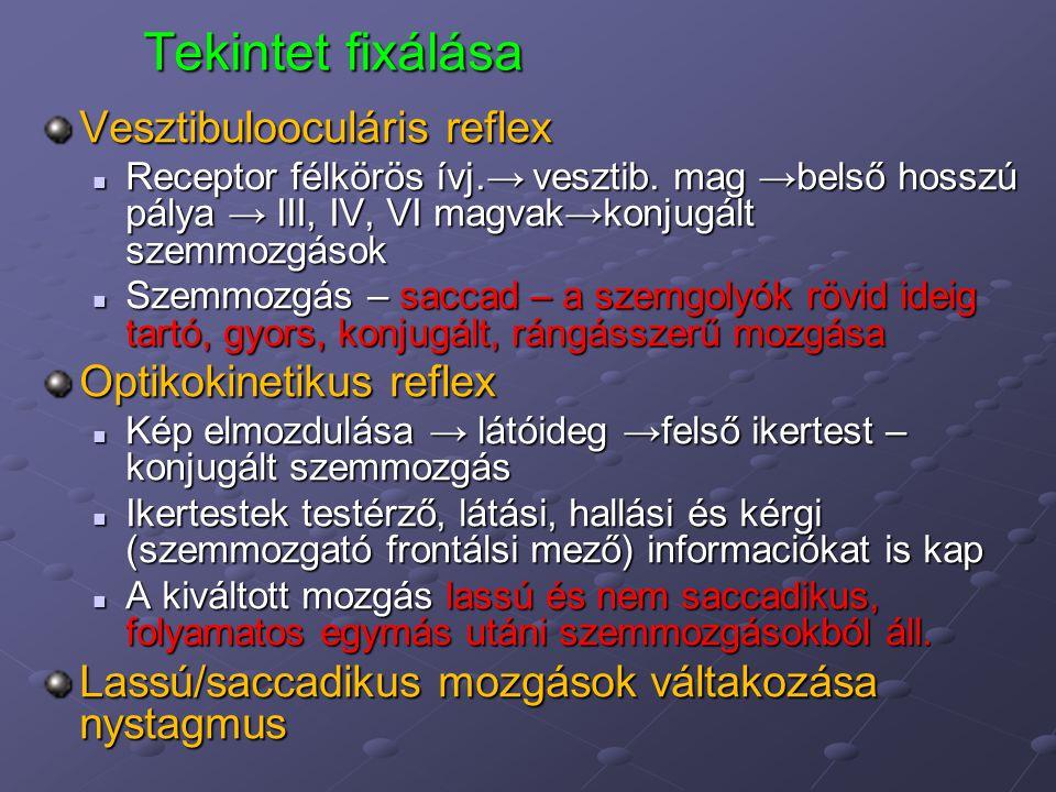 Tekintet fixálása Vesztibulooculáris reflex Optikokinetikus reflex
