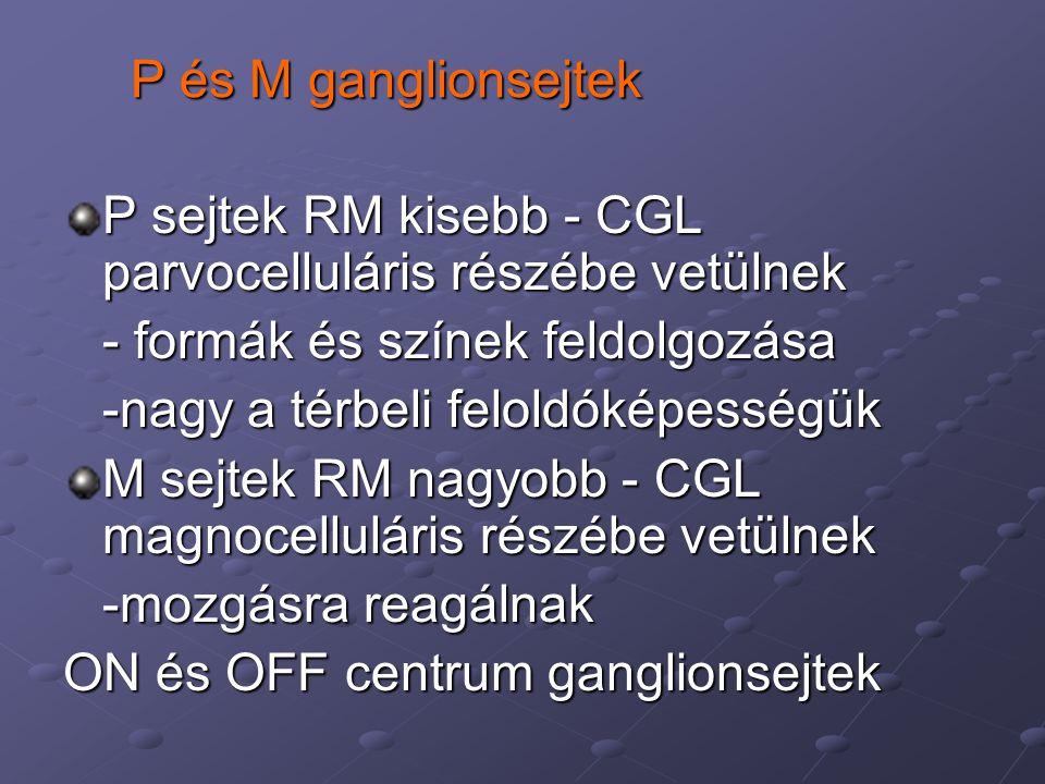 P és M ganglionsejtek P sejtek RM kisebb - CGL parvocelluláris részébe vetülnek. - formák és színek feldolgozása.