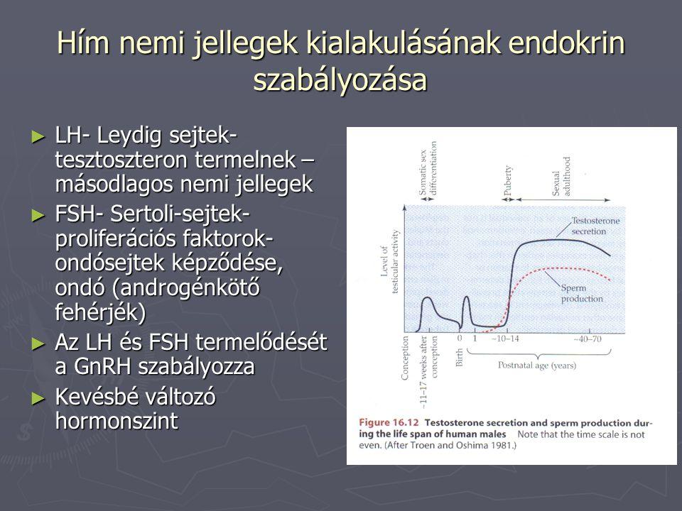 Hím nemi jellegek kialakulásának endokrin szabályozása