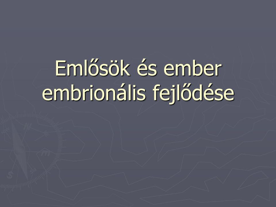 Emlősök és ember embrionális fejlődése