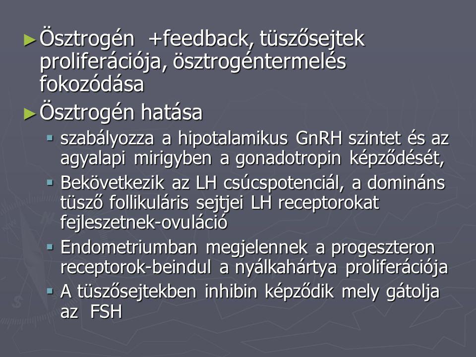 Ösztrogén +feedback, tüszősejtek proliferációja, ösztrogéntermelés fokozódása