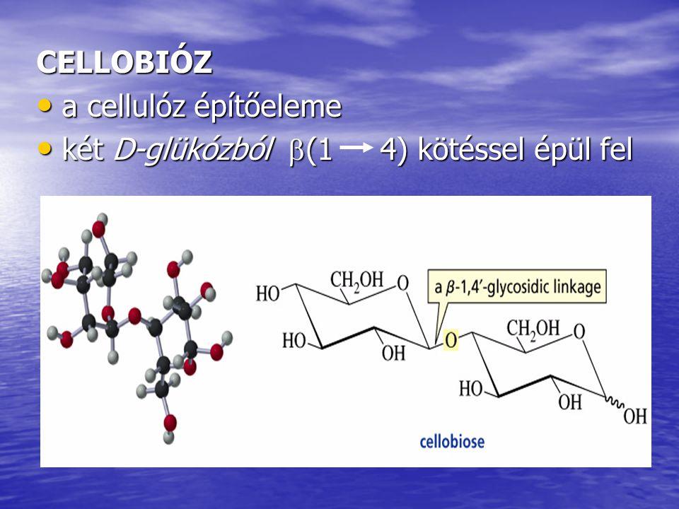 CELLOBIÓZ a cellulóz építőeleme két D-glükózból (1 4) kötéssel épül fel
