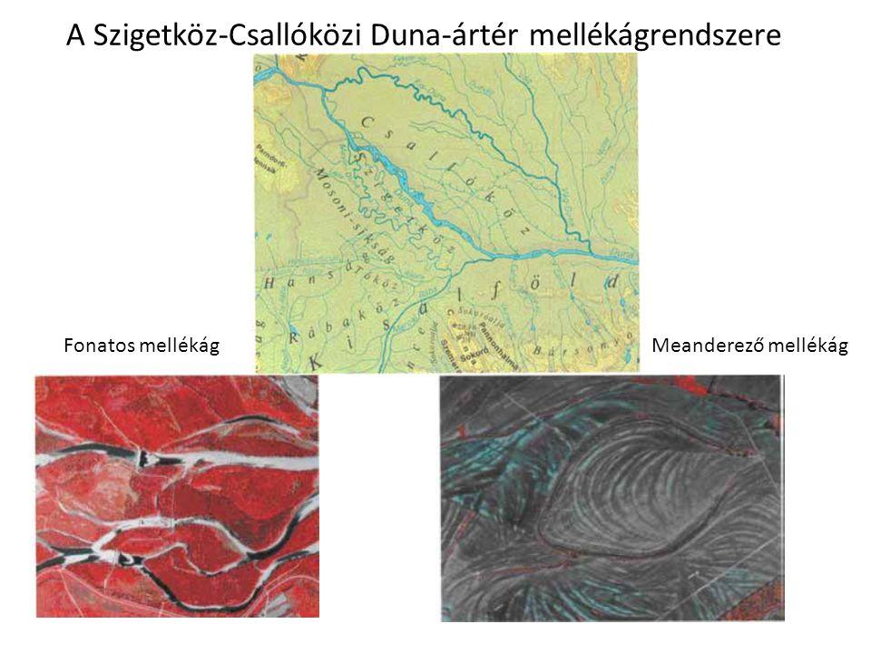 A Szigetköz-Csallóközi Duna-ártér mellékágrendszere