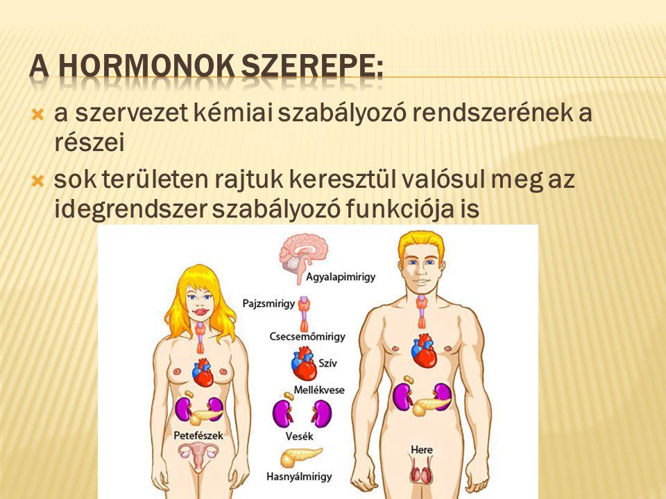 A hormonok szerepe: a szervezet kémiai szabályozó rendszerének a részei