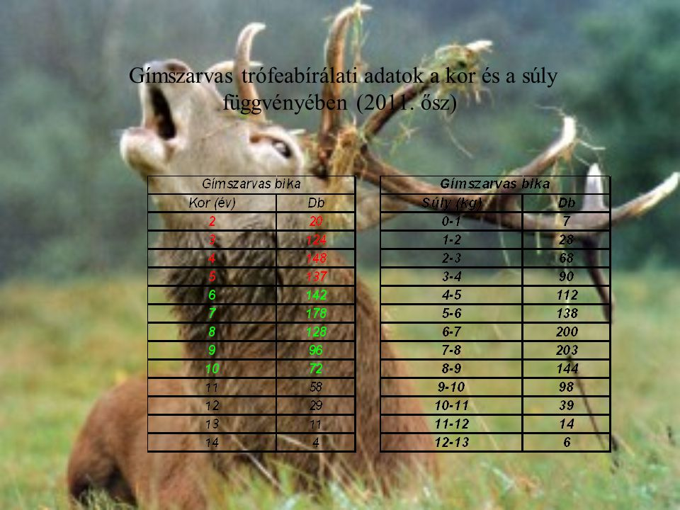Gímszarvas trófeabírálati adatok a kor és a súly függvényében (2011