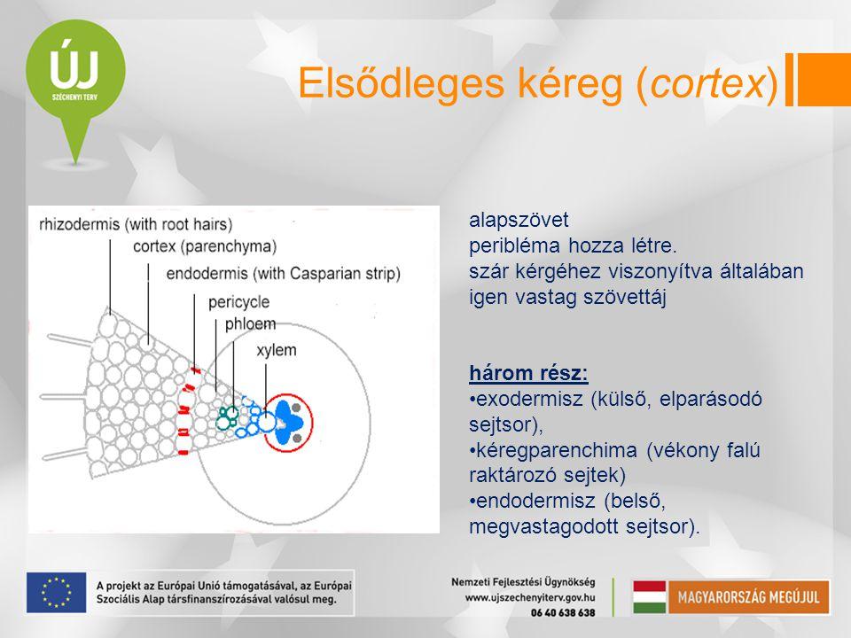 Elsődleges kéreg (cortex)