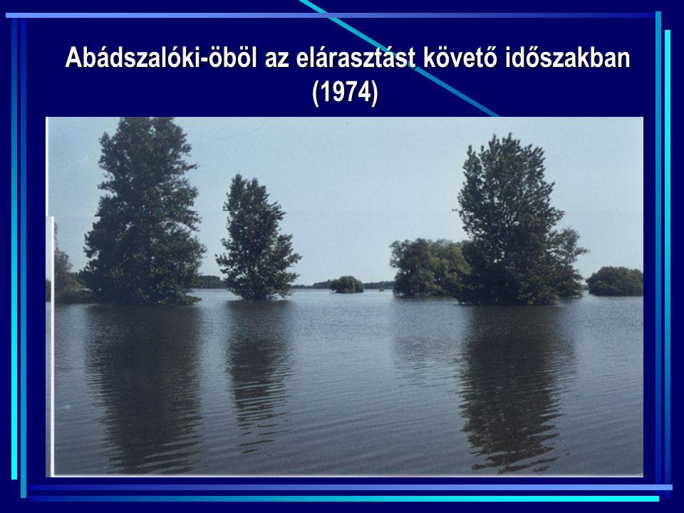 Abádszalóki-öböl az elárasztást követő időszakban (1974)