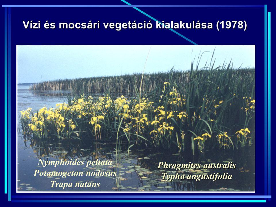 Vízi és mocsári vegetáció kialakulása (1978)