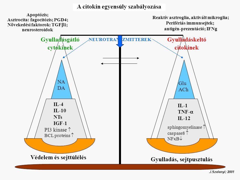 A citokin egyensúly szabályozása