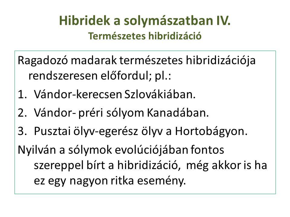 Hibridek a solymászatban IV. Természetes hibridizáció