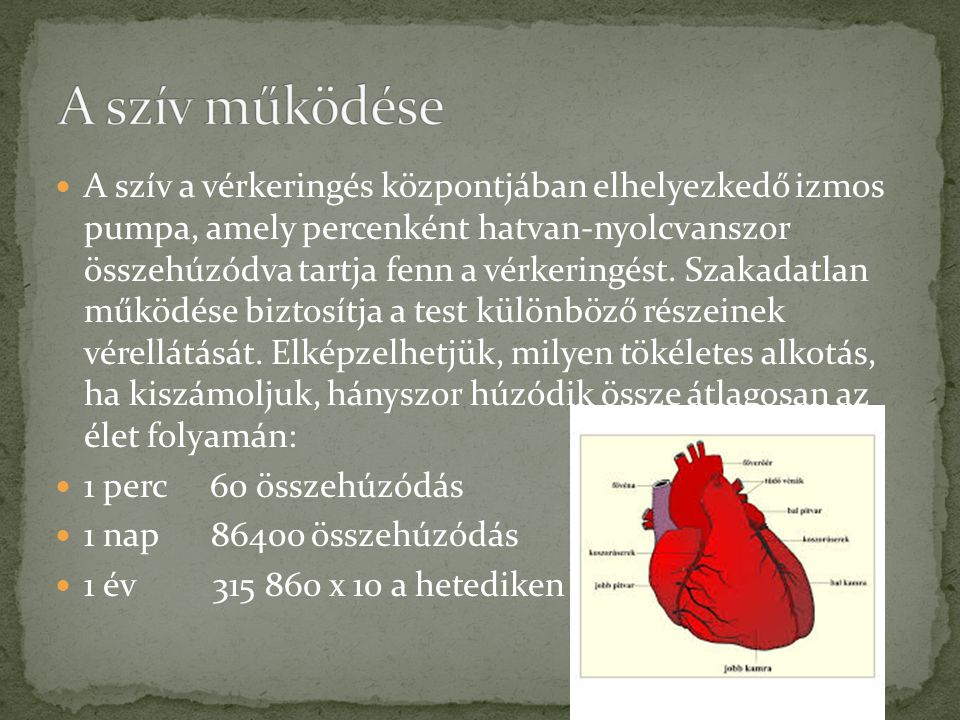 A szív működése