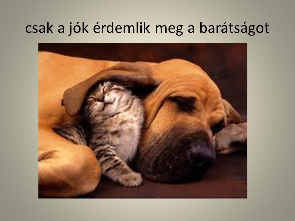 csak a jók érdemlik meg a barátságot