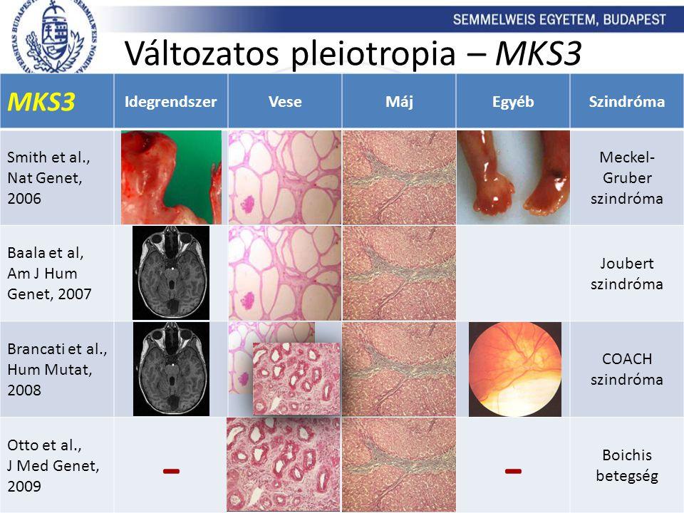Változatos pleiotropia – MKS3