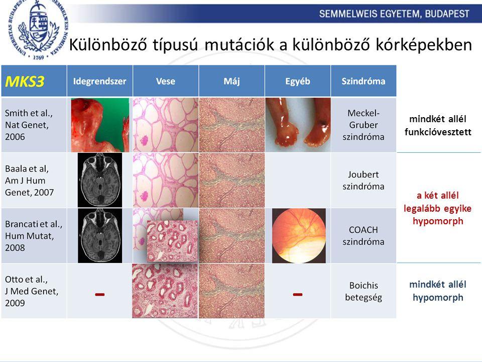 Különböző típusú mutációk a különböző kórképekben