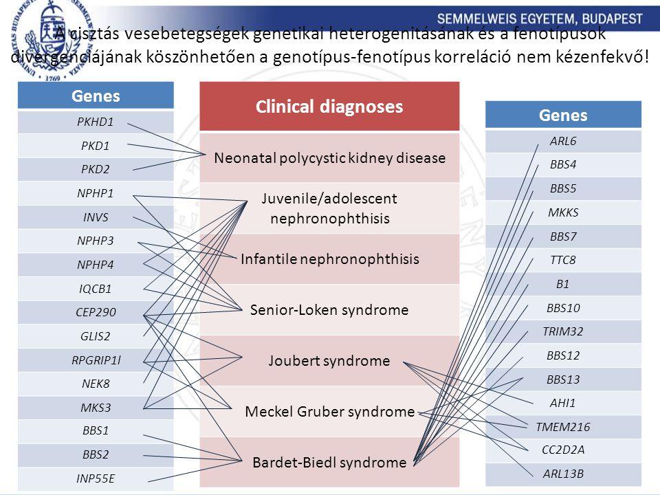 A cisztás vesebetegségek genetikai heterogenitásának és a fenotípusok divergenciájának köszönhetően a genotípus-fenotípus korreláció nem kézenfekvő!