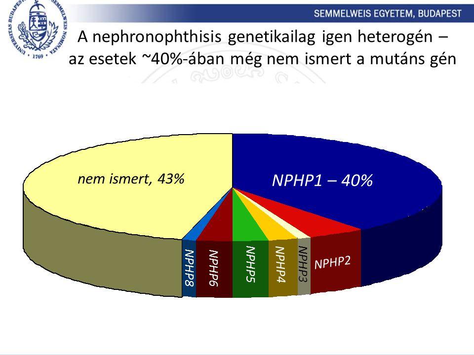 A nephronophthisis genetikailag igen heterogén – az esetek ~40%-ában még nem ismert a mutáns gén