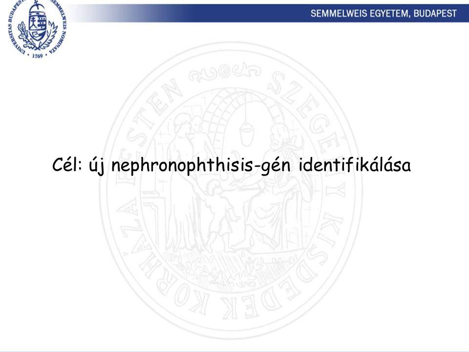 Cél: új nephronophthisis-gén identifikálása