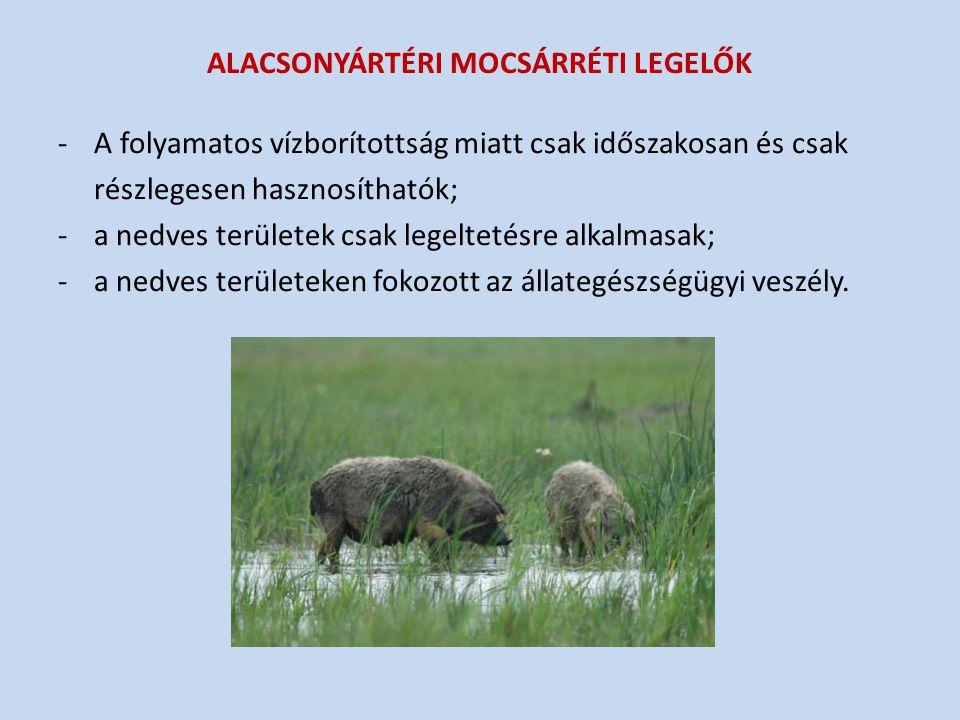 ALACSONYÁRTÉRI MOCSÁRRÉTI LEGELŐK