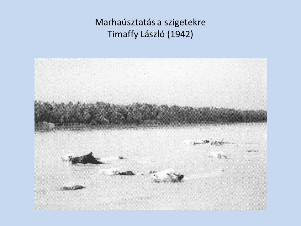 Marhaúsztatás a szigetekre Timaffy László (1942)