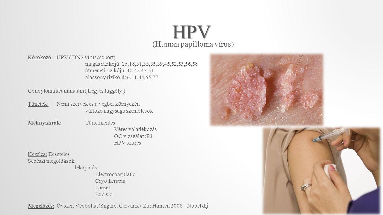 HPV (Human papilloma vírus) Kórokozó: HPV ( DNS víruscsoport)