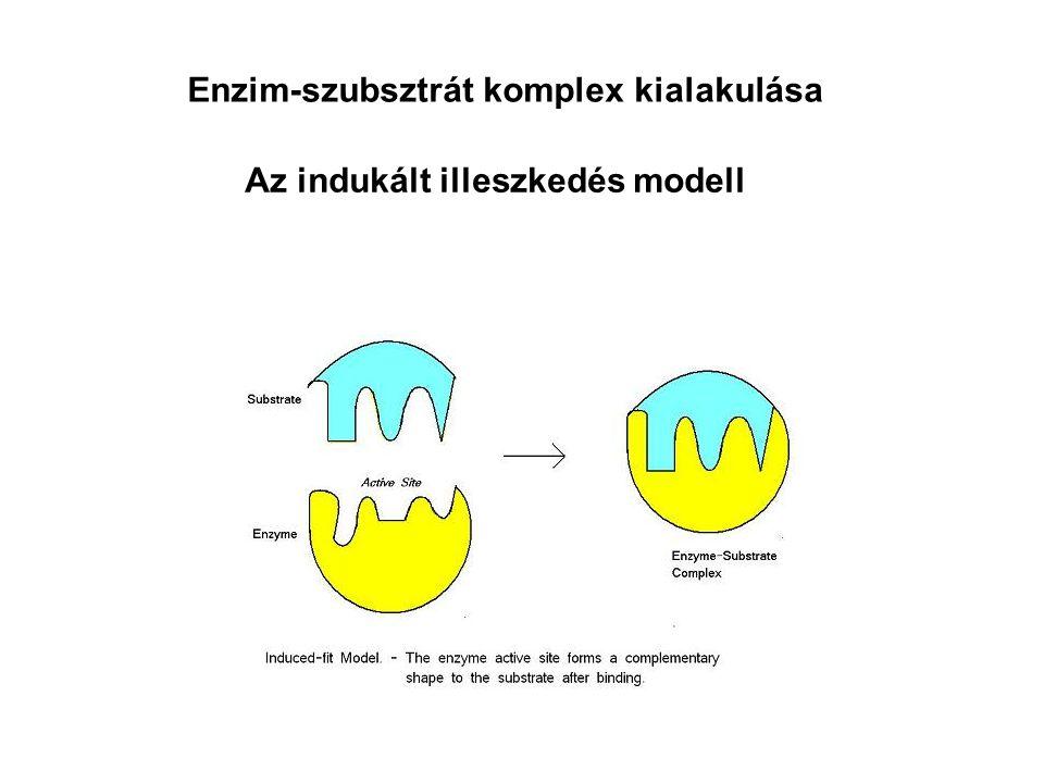 Enzim-szubsztrát komplex kialakulása