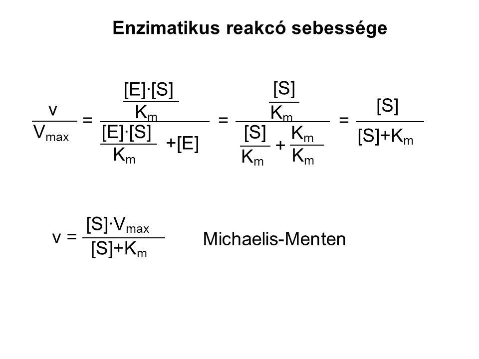 Enzimatikus reakcó sebessége